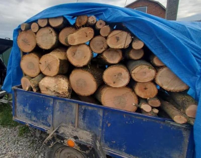 вирубали дерева